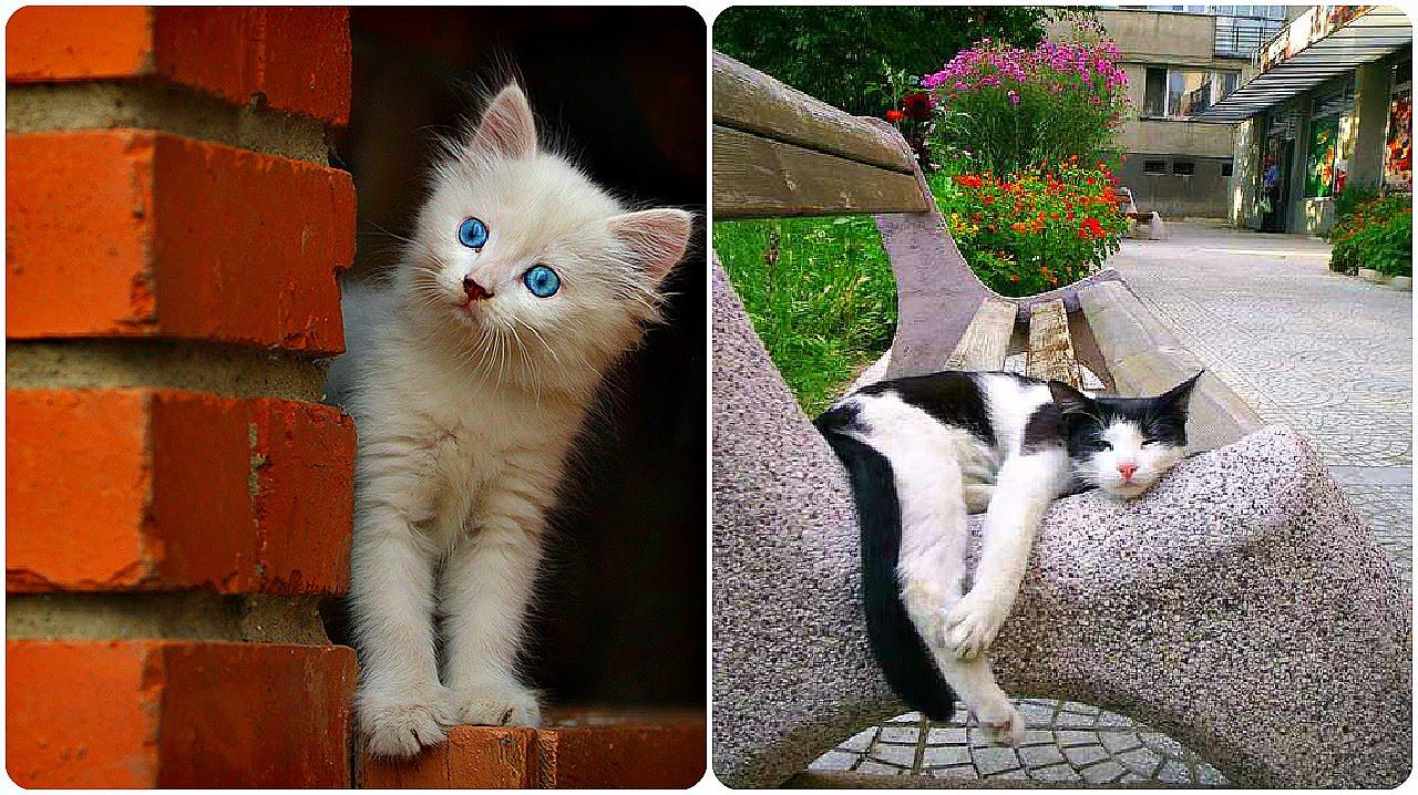 Смешное видео про кошек и котов 2016