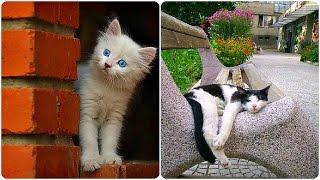 Смешные Кошки 2016! (#15) Веселая Видео Подборка! Смешные Животные 2016/