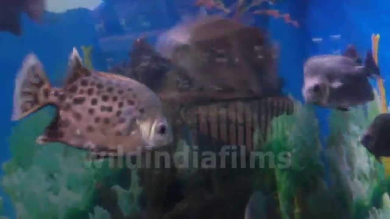 Fish for aquarium in kolkata - Argus Fish Fish Aquarium In Kolkata Science City