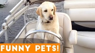 Funniest Pets & Animals of the Week Compilation August 2018 | Funny Pet Videos thumbnail