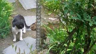 Two male cats and a female cat (1)http://youtu.be/RzeXDOvTqyY (2)ht...