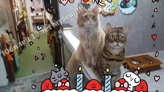 День рождения музея Кошки! Котики приглашают на праздник.