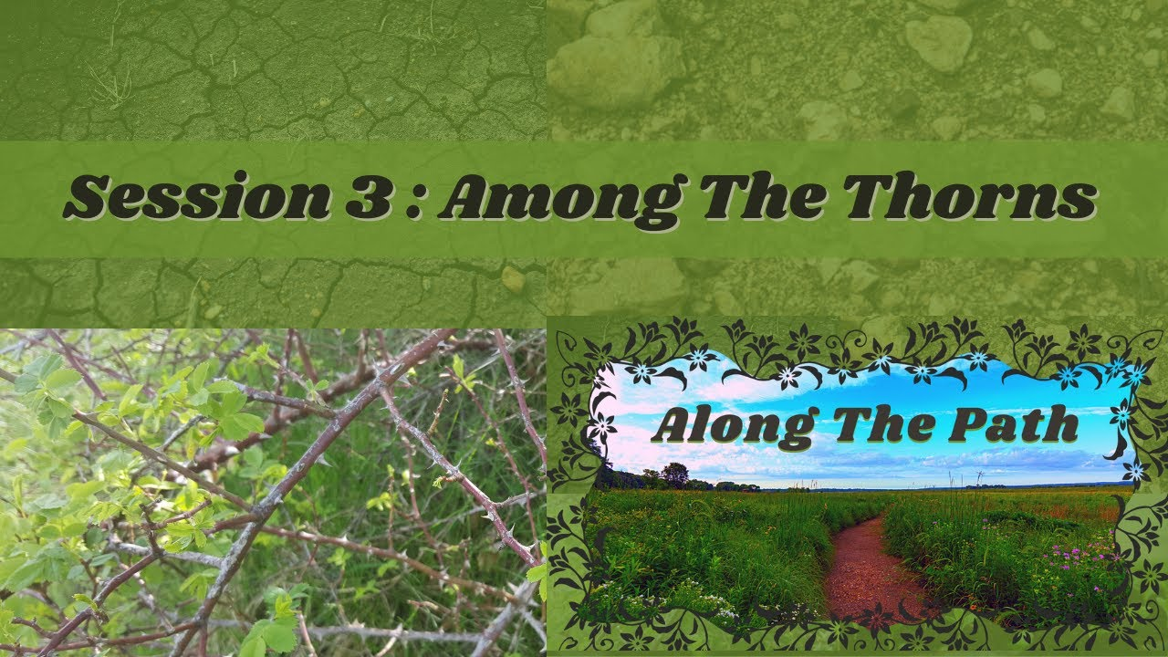 Along The Path - Session 3 : Among The Thorns