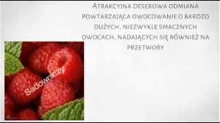 Krzewy Owocowe - Malina powtarzająca owocowanie