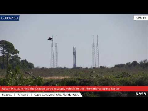 SCRUB: SpaceX CRS-19