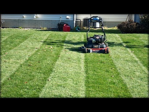 Lawn Update 48 - Final Lawn Mowing of the Season, Toro Timemaster Mulching Leaves and Striping
