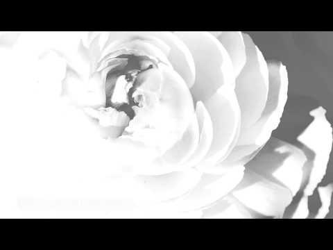 Dido White Flag Subtitulada Español Inglés