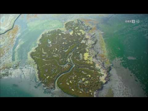 Wild Venice - Wildlife in & around Venice (Italy) and its lagoon. With English subtitles