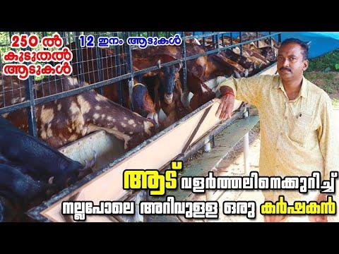 Kochu Agri Goat ഫാമിലെ 12 ഇനത്തിൽപെട്ട മുന്നൂറോളം ആടുകൾ ആട് വളർത്തൽ Goats farming in kerala