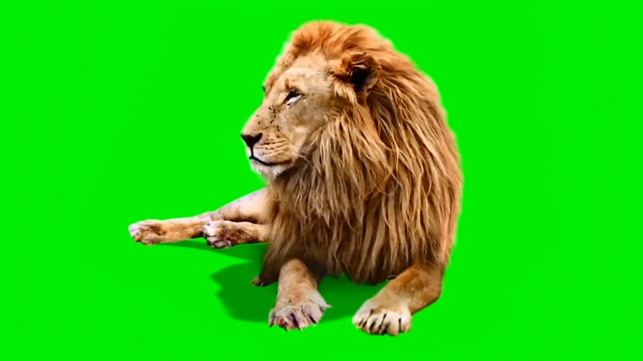 Animals Green Screen For Android Apk Download