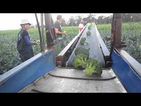 Bio-Veg Organic Farm, Manjimup WA