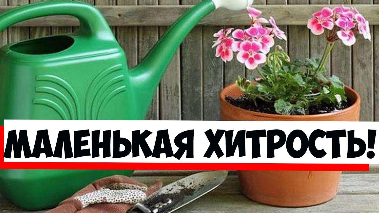 Комнатные растения будут цвести ярче, если использовать касторовое масло по надежному рецепту!