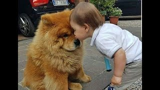 Dog protecting and showing love to Babies -  Cute Babies and Pets Compilation