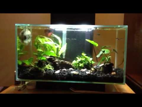 Fluval Edge With Betta And Tetras Youtube