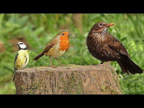 TV for Cats and Dogs - Videos for Cats and Dogs to Watch Birds The Spring Garden