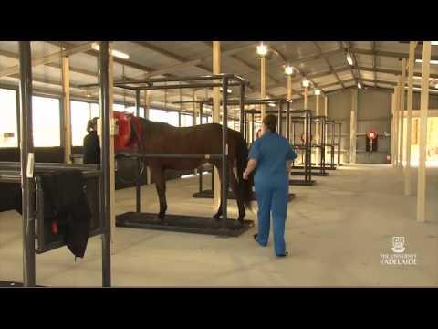 Animal & Veterinary Sciences