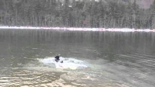 Basil hurls after cold swim