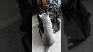 Кошка открыла рюкзак