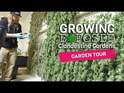 Growing Exposed - Episode 1 - Clandestine Gardens - GARDEN TOUR