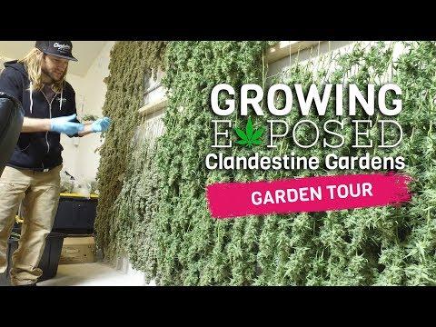 Growing Exposed - Episode 1 - Clandestine Gardens - GARDEN TOUR