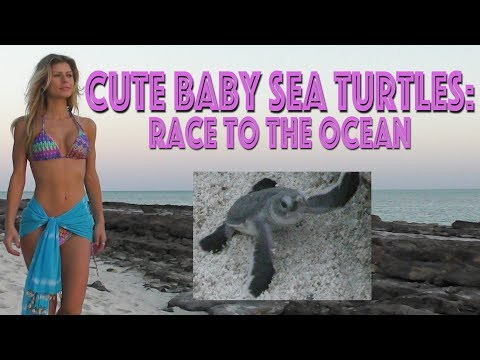 The Cutest New Born Baby Sea Turtles: Great Barrier Reef :