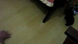 Poodle Micro Toy Preta