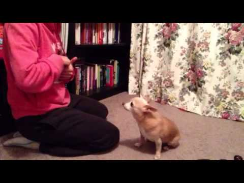 how to teach dog to pray
