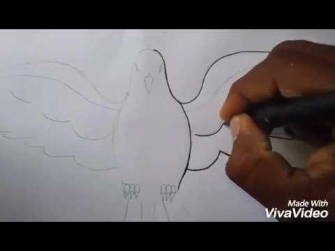 Como dibujar una paloma f�cil y sencillo