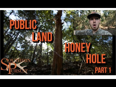 Alabama Public Land Honey Hole |PART 1|