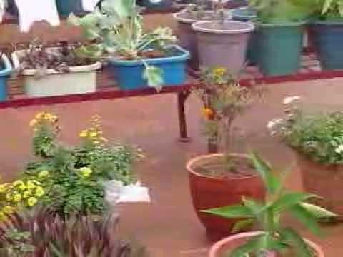 Terrace Garden- Bangalore