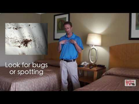Traveling bed bug free