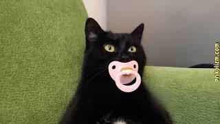 Попробуй не засмеяться, приколы кошки и коты