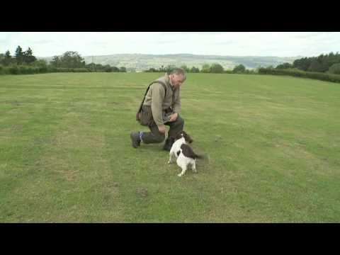 Gundog Training - Mastering the delivery