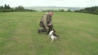 Gundog Training  Mastering the delivery