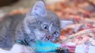Бедный котёнок,плакать сразу же начнёт