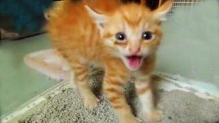 Aggressive Angry Funny Cats. Агрессивные, злые, смешные коты. Приколы. Kitten. Kätzchen