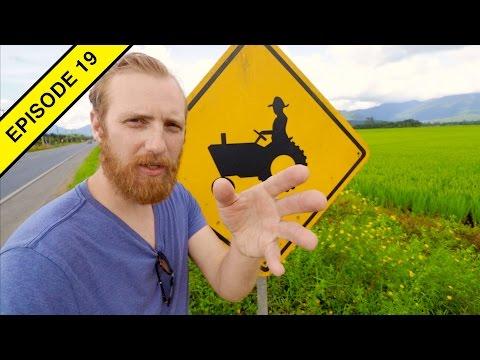 How Rice is Farmed in BRAZIL!