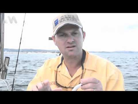 Sydney Kingfish Techniques