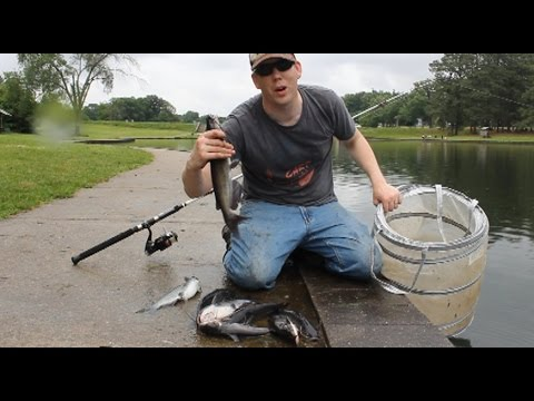 How to Catch BIG Catfish - Baits, Rigging, Cast Net Tutorial, and Location (ft. Catfish and Carp) from YouTube · High Definition · Duration:  10 minutes 33 seconds  · 5,665,000+ views · uploaded on 10/6/2016 · uploaded by 1Rod1ReelFishing
