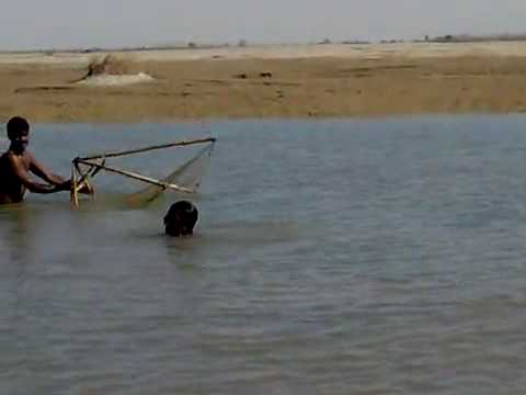 fishing in pakistan indus river trip.mp4