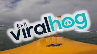 Happy Surf Dog Shreds Like a Pro || ViralHog