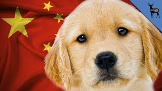 Why Are Golden Retrievers Banned In China?