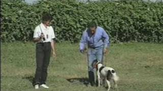 Tri-tronics Hold Command For Bird Dogs Part 6 Of 6