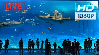 """World's biggest Aquarium"""