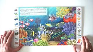Обзор книги Первые книги малыша. Учим новые слова. Животные и растения морей и океанов