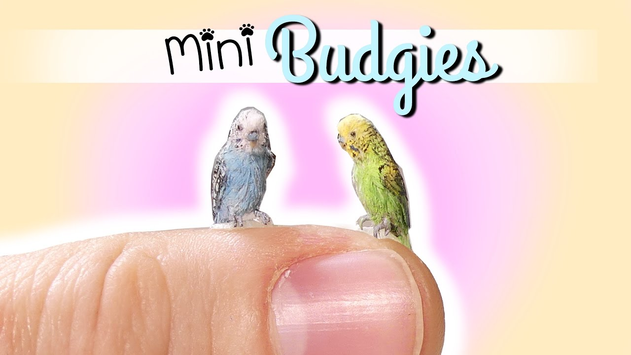 Birds Parrot  Miniature Dollhouse Doll House Picture
