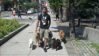 Mile High Club: Dog's In The City Of Nyc - Dog Training - Dctk9