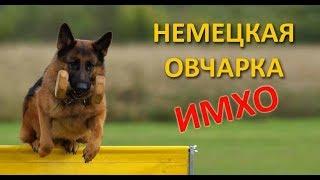 НЕМЕЦКАЯ ОВЧАРКА - ИМХО