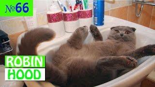 ПРИКОЛЫ 2017 с животными. Смешные Коты, Собаки, Попугаи // Funny Dogs Cats Compilation. Март №66