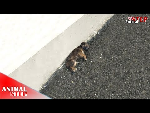 Sick Stray Puppy Screaming at Side of the Street Waiting Someone for Help
